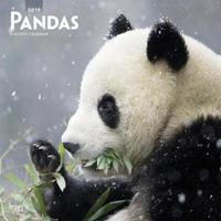 Pandas 2019 Square Wall Calendar by Inc Browntrout Publishers image