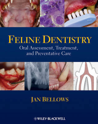 Feline Dentistry by Jan Bellows