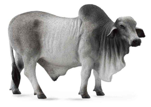 CollectA - Brahman Bull