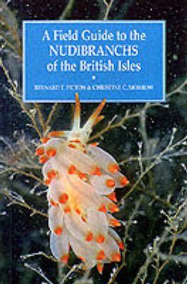 A Field Guide to the Nudibranchs of the British Isles by Bernard Picton image