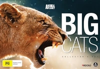 Big Cats Collector's Set on DVD