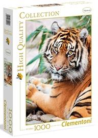 Clementoni: 1000-Piece Puzzle - Sumatran Tiger