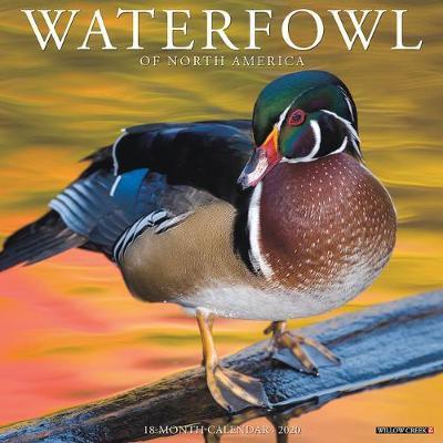 Waterfowl 2020 Wall Calendar by Willow Creek Press
