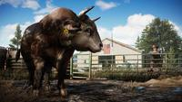 Far Cry 5 for Xbox One