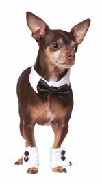 Rubie's: Tuxedo Set - Pet Costume(Large - XL)
