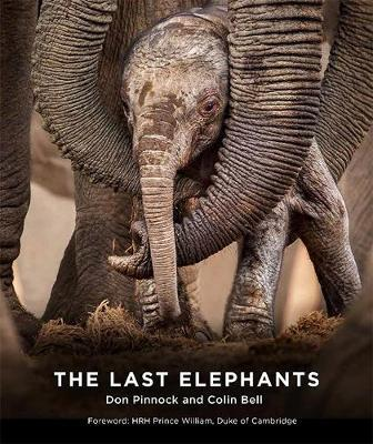 The Last Elephants by Colin Bell