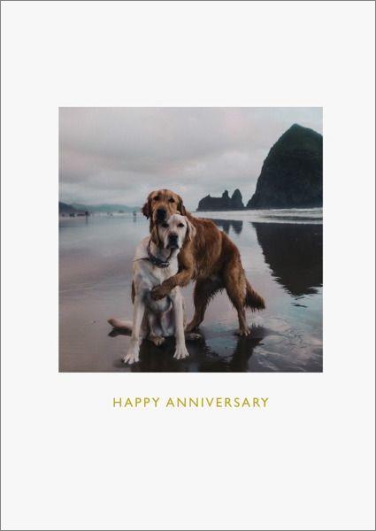 Oh Deer: Happy Anniversary Beach Dogs Greeting Card