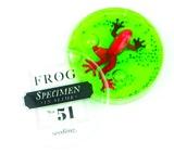 Seedling: Frog Specimen #51- Assorted