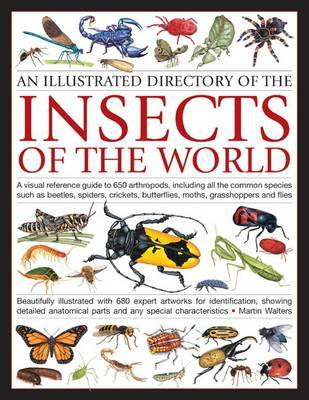 Illustrated Directory of Insects of the World by Martin Walters