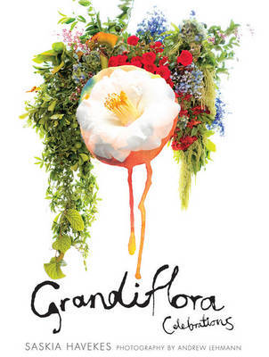 Grandiflora Celebration by H & Lehmann, A Saskia