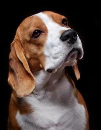 Beagle Notebook by Notebooks Journals Xlpress image