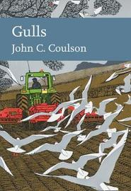 Gulls by John Coulson