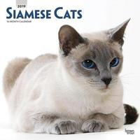 Siamese Cats 2019 Square Wall Calendar by Inc Browntrout Publishers image