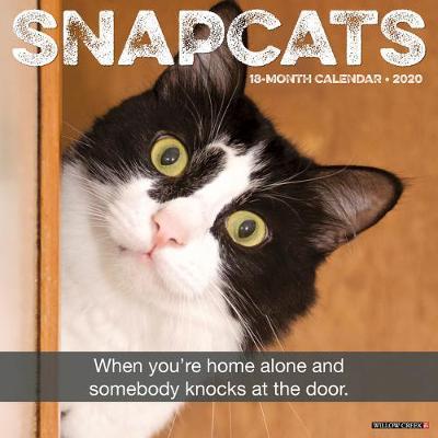 Snapcats 2020 Wall Calendar by Willow Creek Press