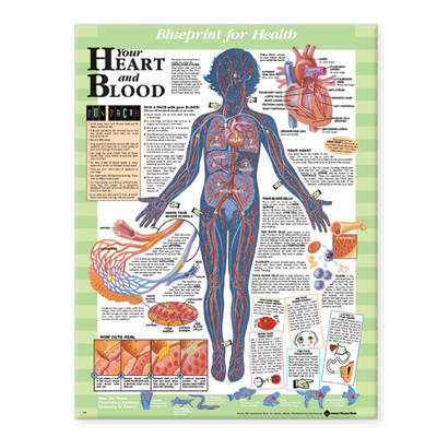 Your Heart and Blood Chart image