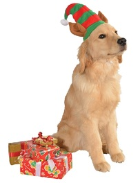 Rubie's: Elf Hat with Ears - Pet Hat (Medium/Large)
