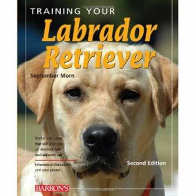 Training Your Labrador Retriever by September Morn image
