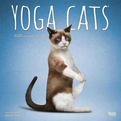 Yoga Cats 2020 Square Wall Calendar