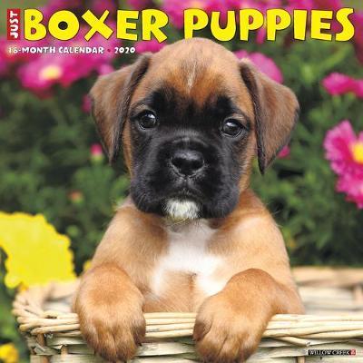 Just Boxer Puppies 2020 Wall Calendar (Dog Breed Calendar) by Willow Creek Press
