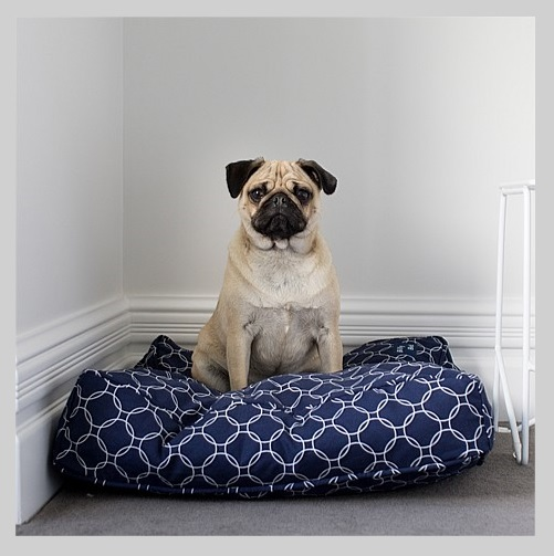 Beethoven Cushion Small