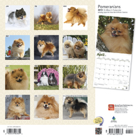 Pomeranians 2019 Square Wall Calendar by Inc Browntrout Publishers image