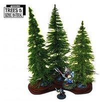 Mature Fir Trees x 3