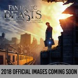 Fantastic Beasts and Where to Find Them 2018 Square Wall Calendar