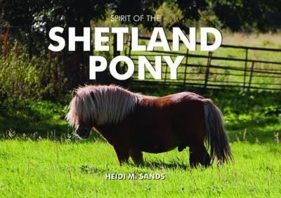 Spirit of the Shetland Pony by Heidi M. Sands image