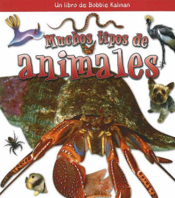 Muchos Tipos de Animales (Many Kinds of Animals) by Bobbie Kalman
