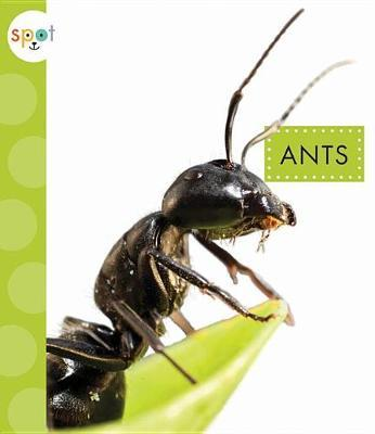 Ants by Nessa Black