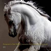 The Arabian Horse of Egypt by Cynthia Culbertson