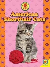 American Shorthair Cats by Nancy Furstinger