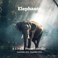 Elephants 8.5 X 8.5 Calendar September 2019 -December 2020 by Lynne Book Press image