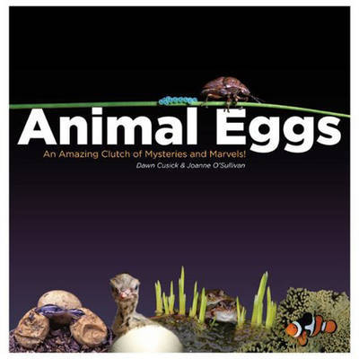 Animal Eggs by Dawn Cusick