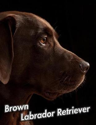 Brown Labrador Retriever by Notebooks Journals Xlpress