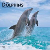 Dolphins 2020 Square Wall Calendar by Inc Browntrout Publishers