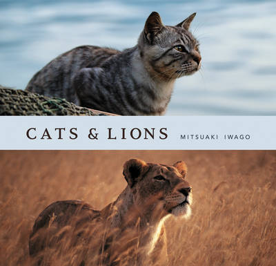 Cats and Lions by Mitsuaki Iwago