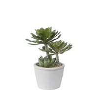 General Eclectic: Artificial Plant - Succulent