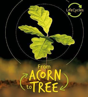 Lifecycles - Acorn to Tree by Camilla de la Bedoyere