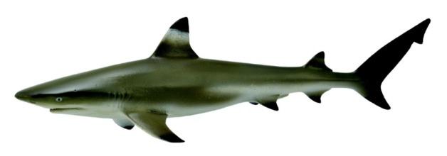 CollectA - Blacktip Reef Shark