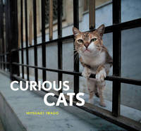 Curious Cats by Mitsuaki Iwago image