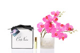 Côte Noire Perfumed Natural Touch Orchid Stem (Pink Blossom)