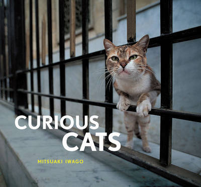 Curious Cats by Mitsuaki Iwago