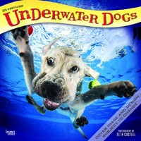Underwater Dogs 2018 Square Wall Calendar by Inc Browntrout Publishers