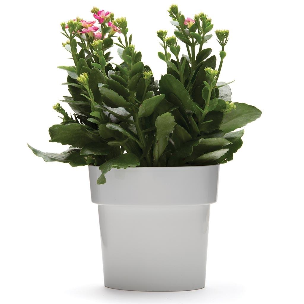 Monkey Business: Slim Flower Pot (Grey) image