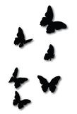Crystal Ashley Flying Butterflies - Black ACM