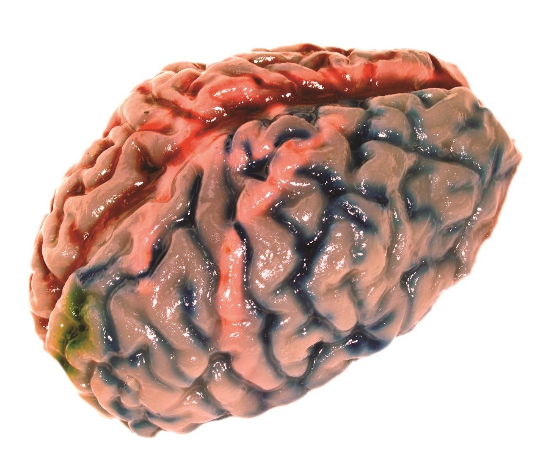 Scientific Explorer: Disgusting Anatomy - Brain Science Kit image