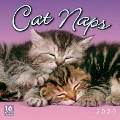 Cat Naps 16-Month 2020 Calendar by Sellers Publishing