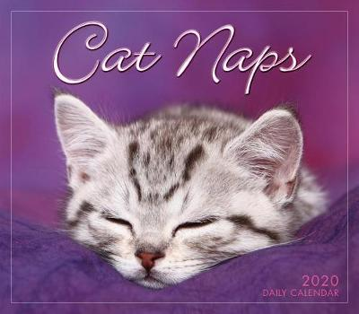 Cat Naps 2019 Day-to-Day Calendar by Sellers Publishing
