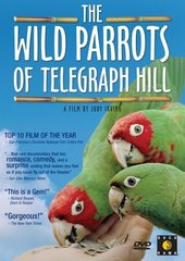 The Wild Parrots Of Telegraph Hill on DVD